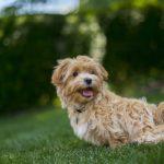 Vegan Dog Food – Is it Cruel or Kind?